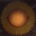TEARS FOR FEARS Sowing The Seeds Of Love UK CD3 w/Sunflower-Shaped Case